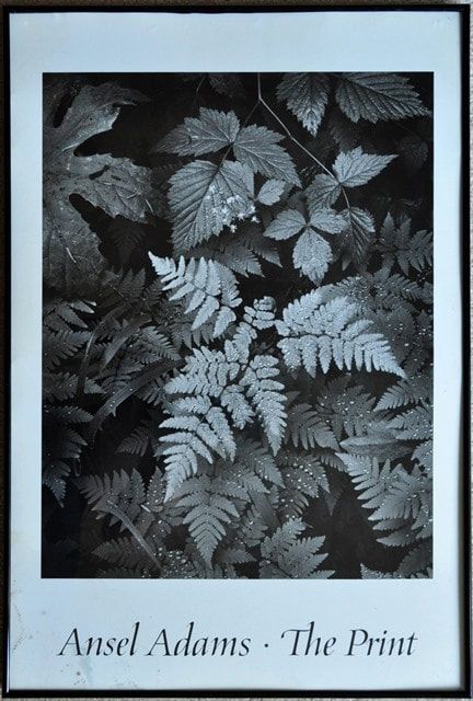 Framed print of photograph by Ansel Adams titled The Leaf