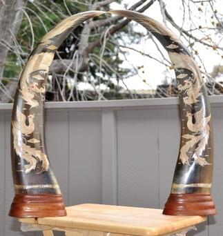 Pair of buffalo horns from Vietnam with scrimshaw of dragon and phoenix